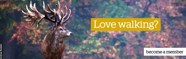 Love walking_deer V2